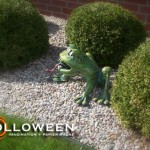 stolloween-frog-photos-38